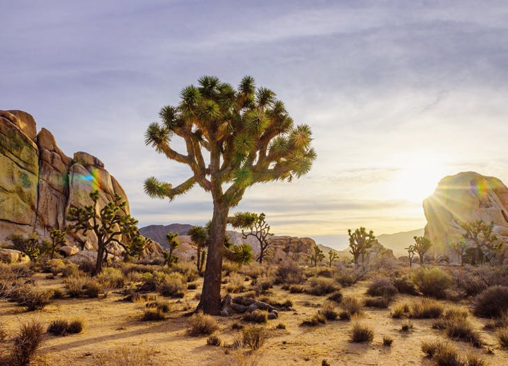 Best Camping Sites in CA Joshua Tree National Park