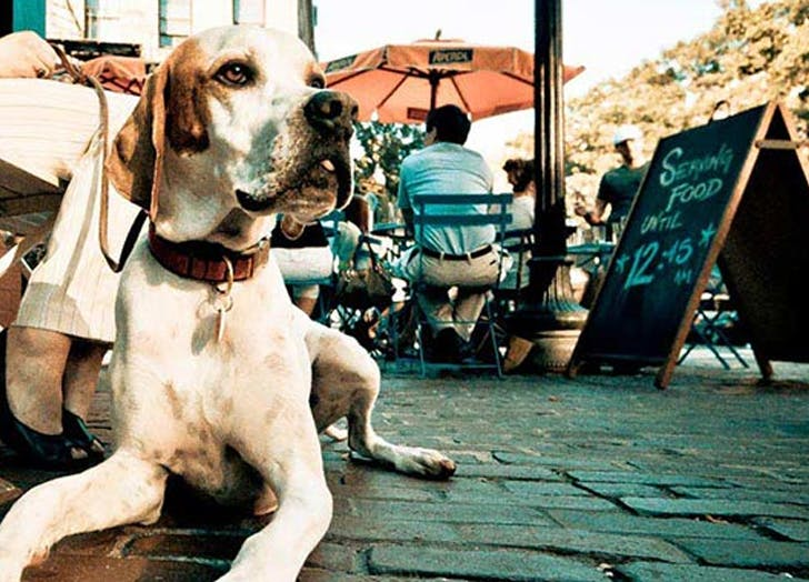 Dog friendly restaurants in nyc CAT
