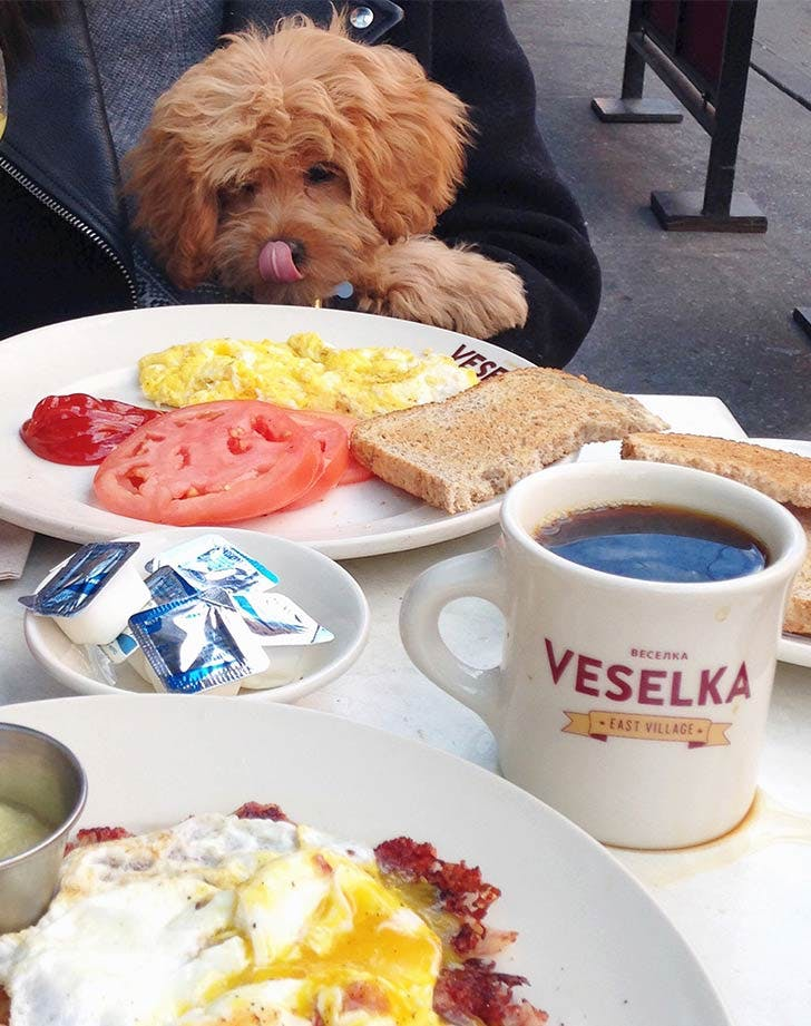 Dog friendly restaurants in nyc veselka