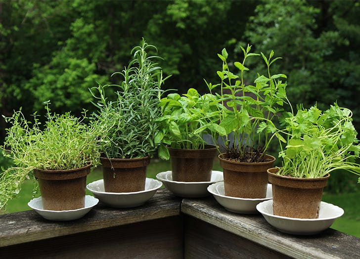 Summer vegetables Annual Herbs