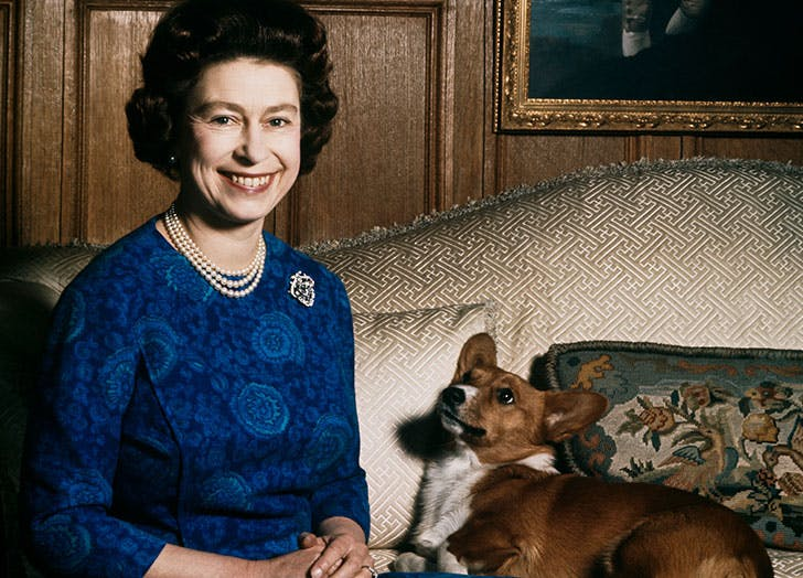 Calling All Corgi Lovers: The Queen Has Launched a Collection of Pet Accessories and It Is Très Chic