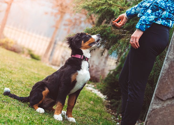 9 Dog Training Hacks From Professional Dog Trainers