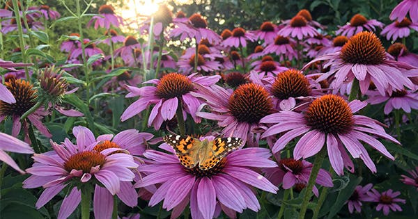 The 15 Best Heat Tolerant Plants (Because the Dog Days of Summer Are Here!)