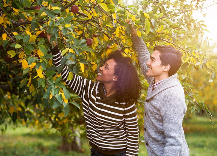 Fall Date Ideas Go apple picking