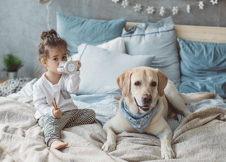 Kid Friendly Dogs Labrador Retriever