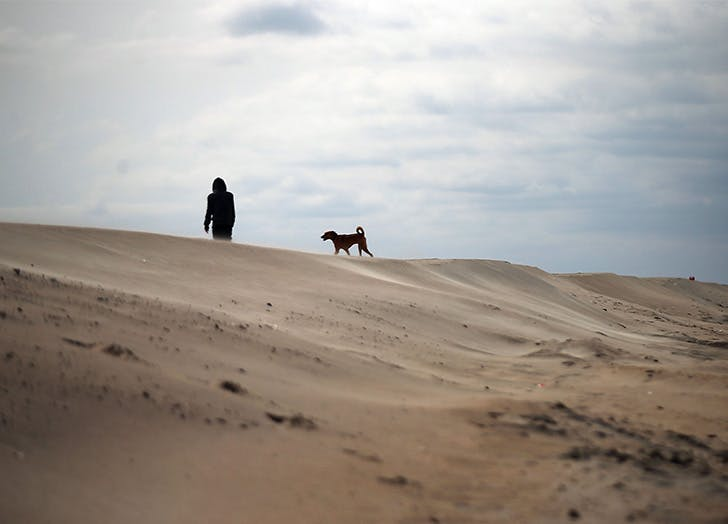 NYC Dog Beaches CAT