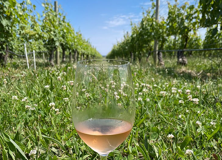 Psst: There's a Secret Vineyard on Long Island—Here's How You Can Get a Sip