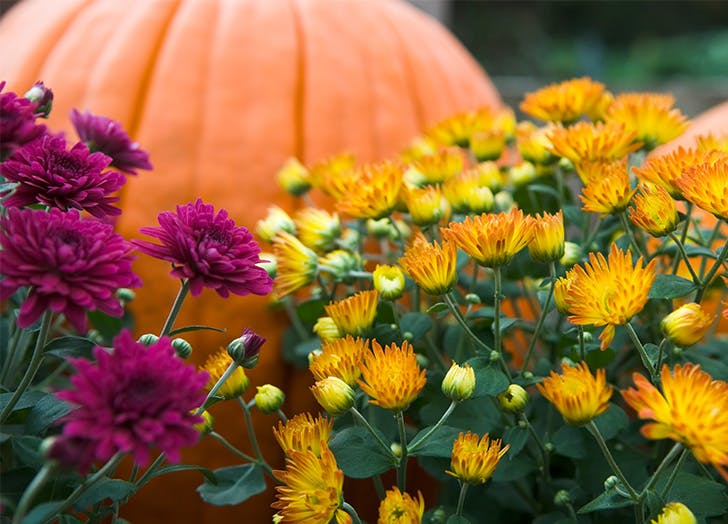 What to Plant in the Fall CAT