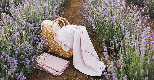 What to Plant with Lavender: 9 Best Companions