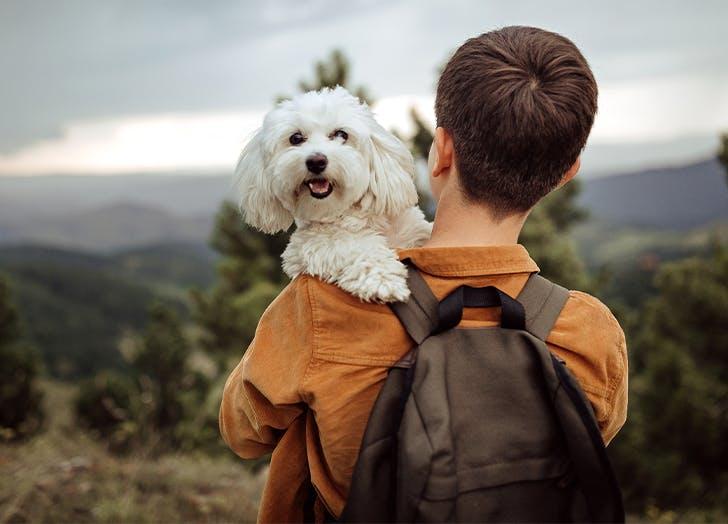easy dog breeds for travel maltese