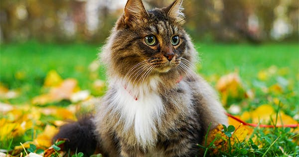 The 5 Most Popular Cat Breeds in the U.S. (& What Makes Them So Great)