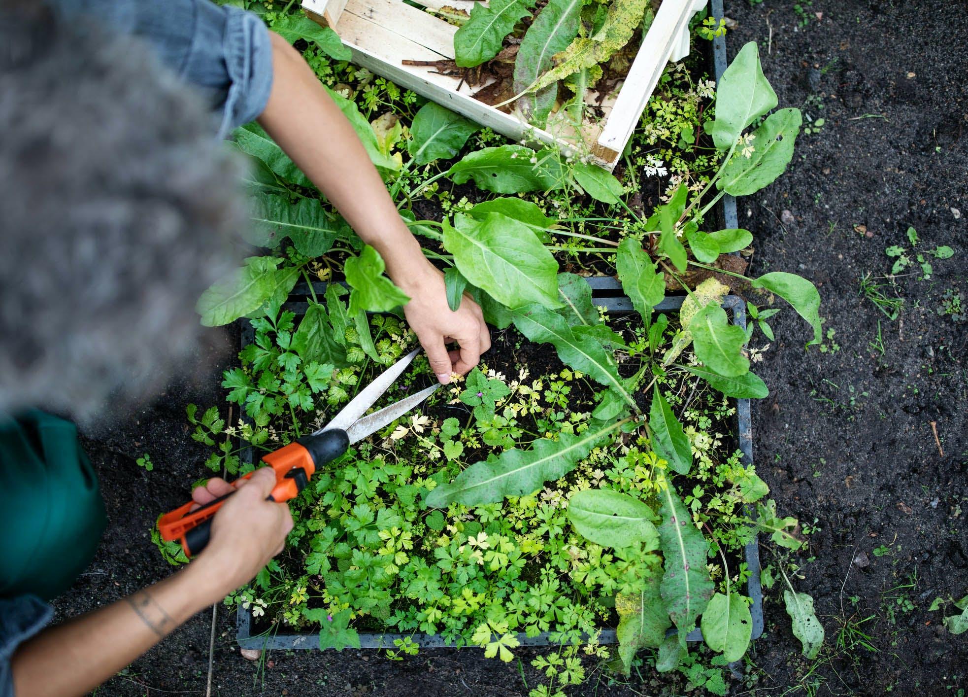 rage gardening weeding