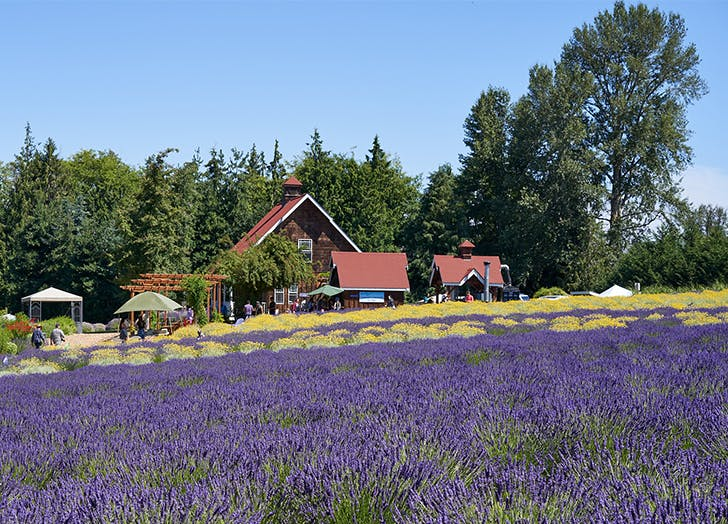 Charming Small Towns in Washington SEQUIM