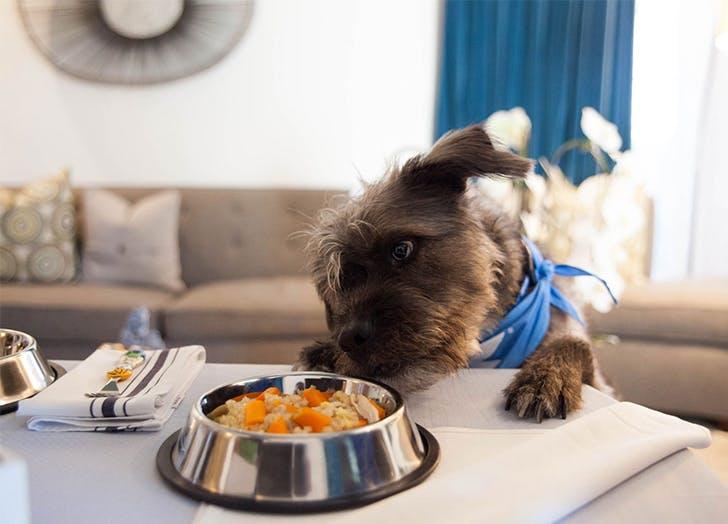 Dog Friendly Hotels in LA CAT