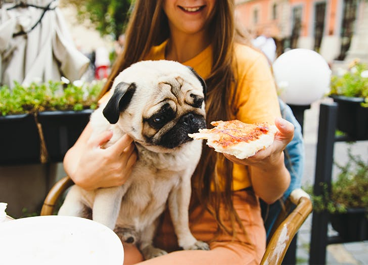 Dog Friendly Restaurant and Bars in Chicago CAT