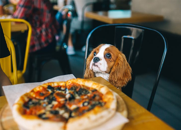 Dog Friendly Restaurants in Miami CAT