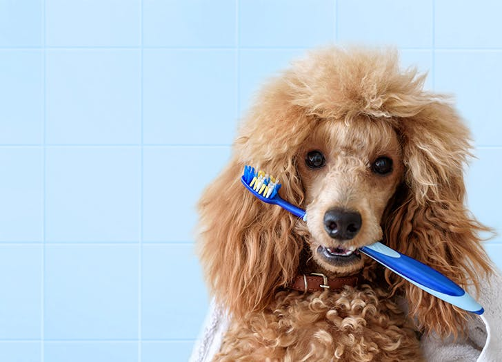 How to Clean Your Dog s Teeth CAT