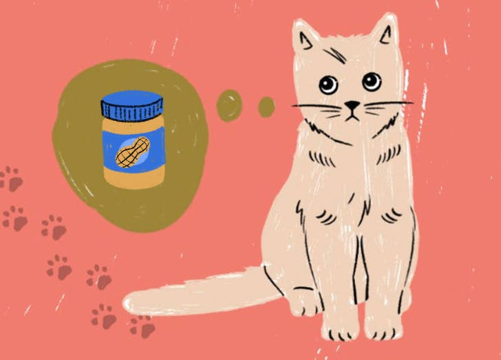 Your Dog Loves It, but Can Cats Eat Peanut Butter Too?