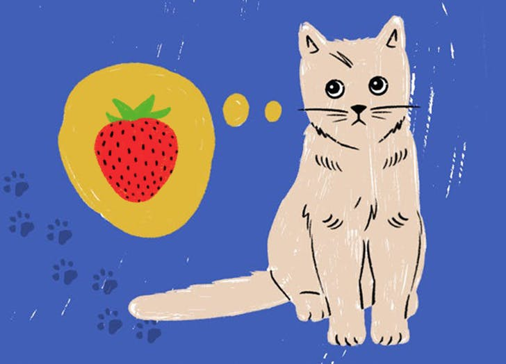 Can Cats Eat Strawberries? Here's the Juicy Truth