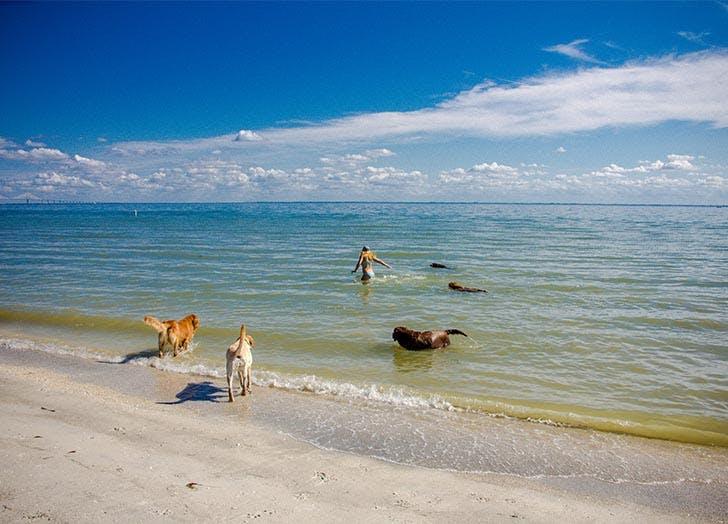 Best Dog Friendly Beaches in Florida CAT