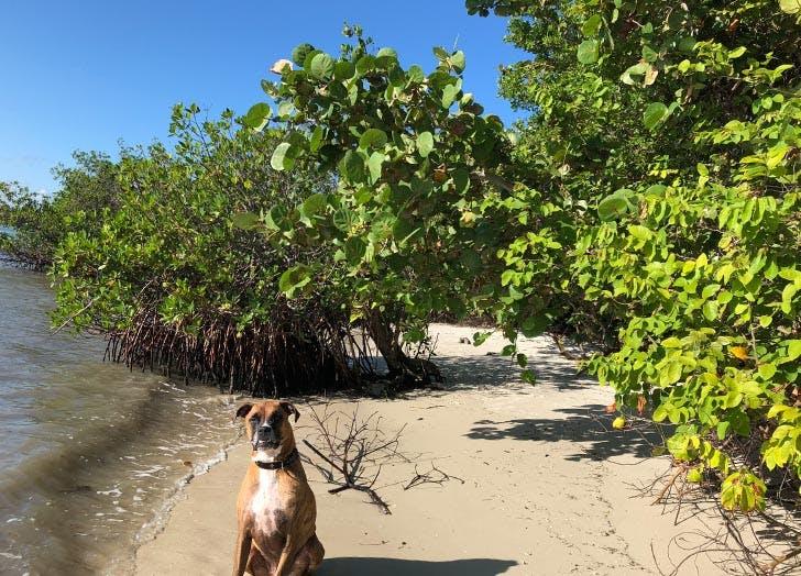 Best Dog Friendly Beaches in Florida Jupiter Beach
