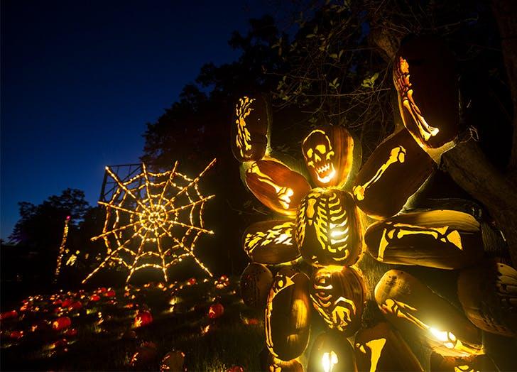 Halloween Events Near NYC The Great Jack O Lantern Blaze