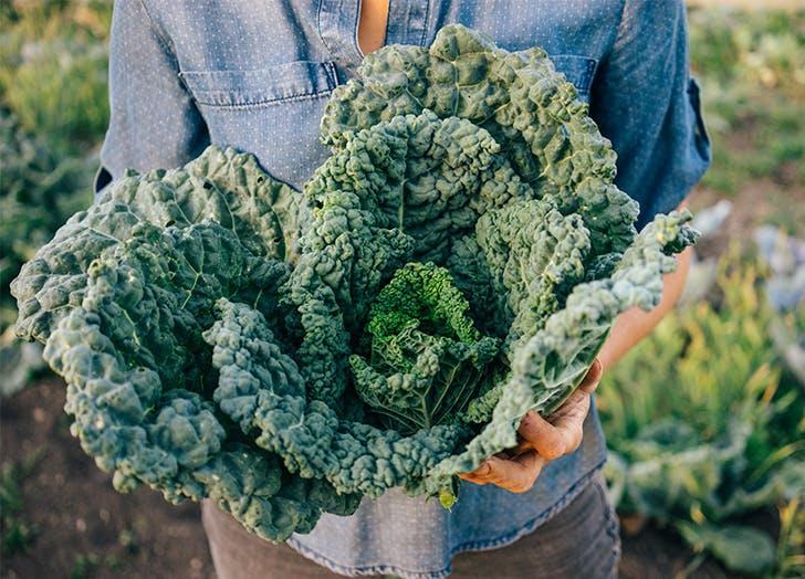 Winter Vegetables Kale