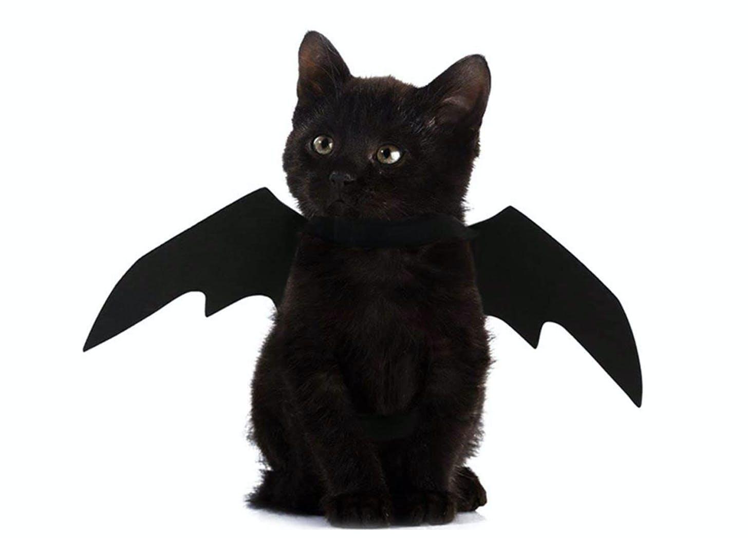 bat cat halloween costumes