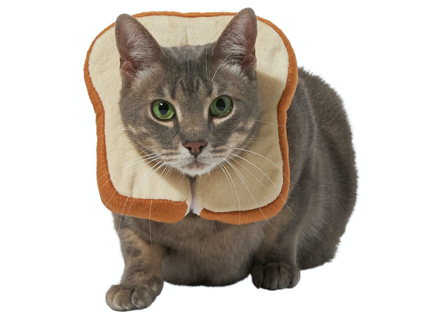bread face cat halloween costumes