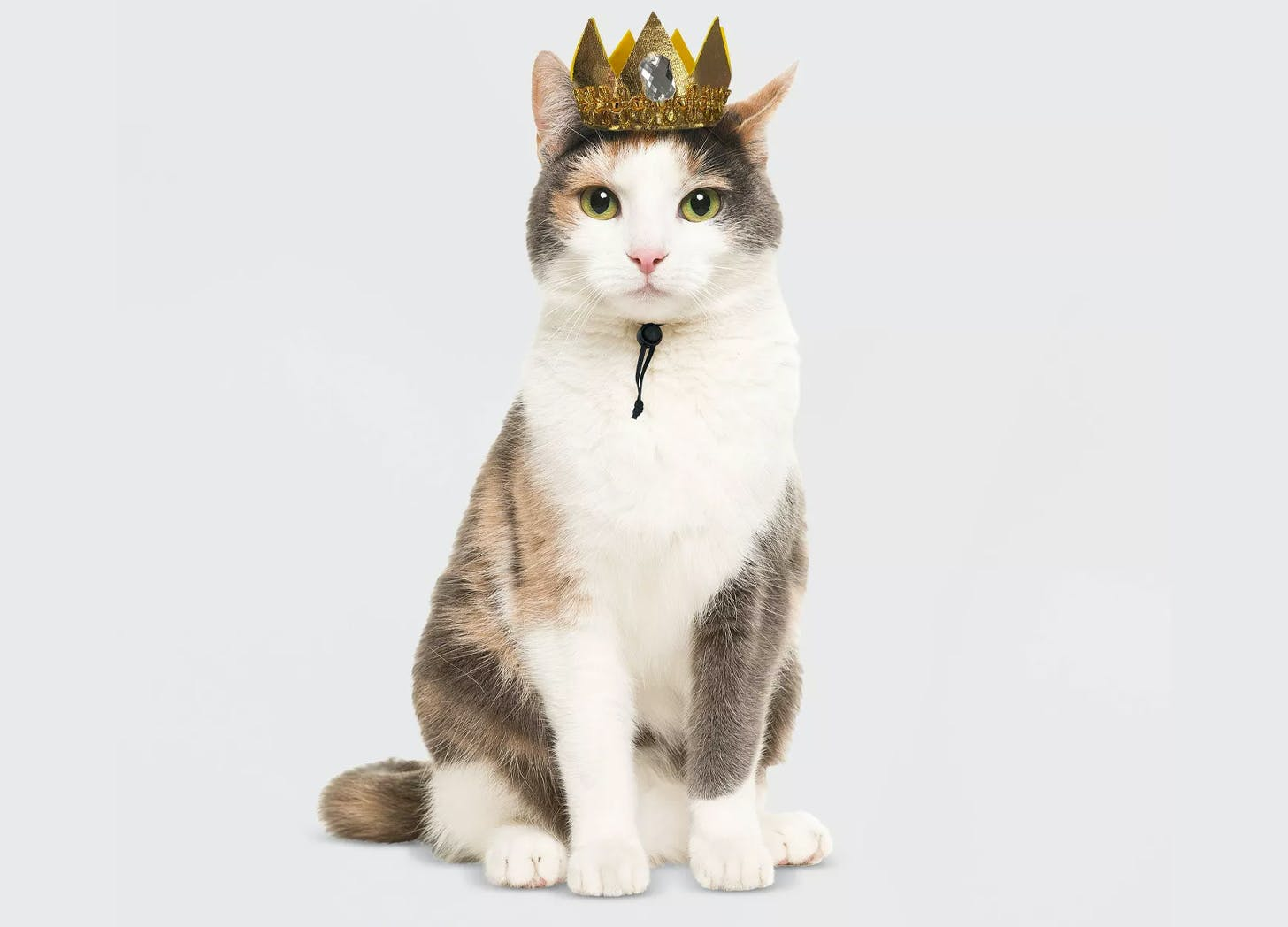crown cat halloween costumes