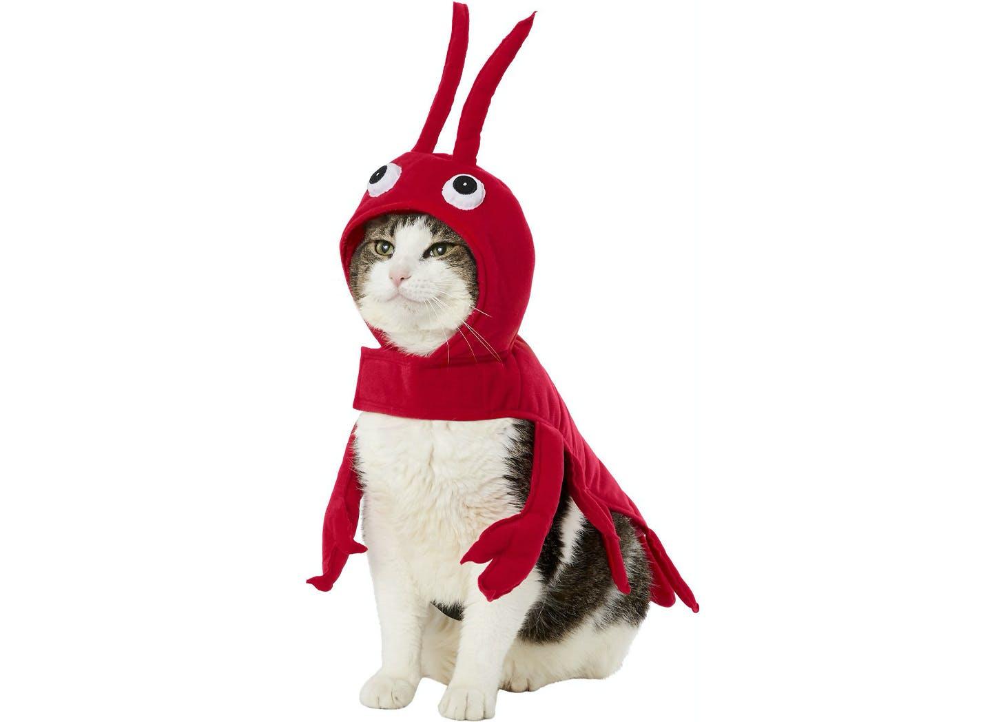 lobster cat halloween costumes