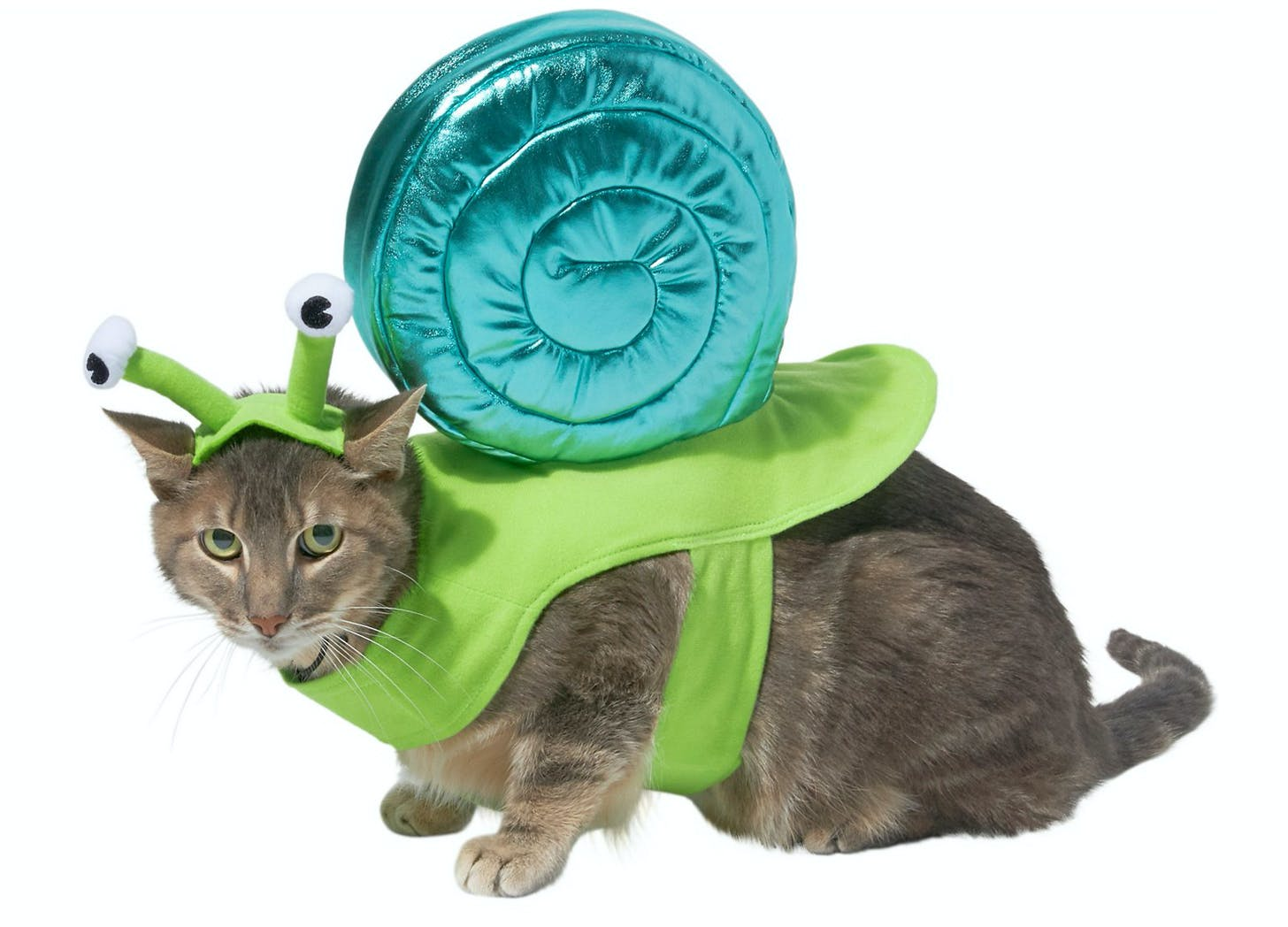 snail cat halloween costumes