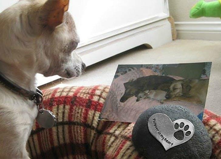 Pet Memorial Gifts CAT