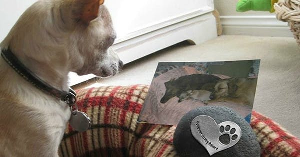 13 Heartwarming Pet Memorial Gifts to Give After the Loss of a BFF (Best Furry Friend)