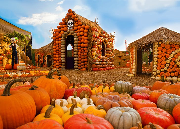 The Best Pumpkin Patches In and Around Los Angeles to Head to This Fall CAT