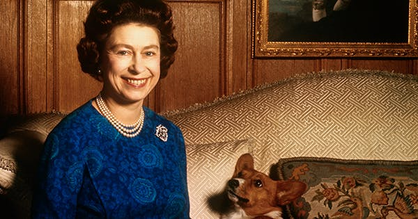 A Full List List of Royal Family Dogs From Corgis to Rescue Labs